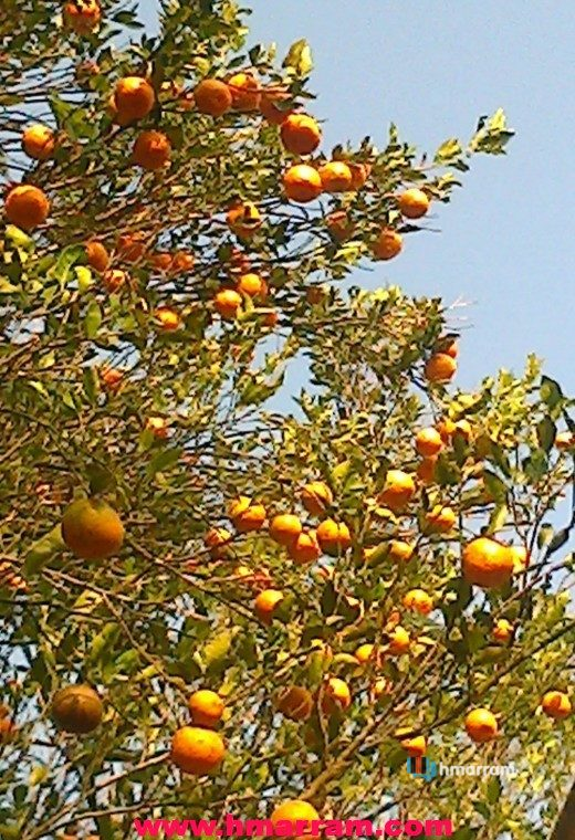 Leiri orange