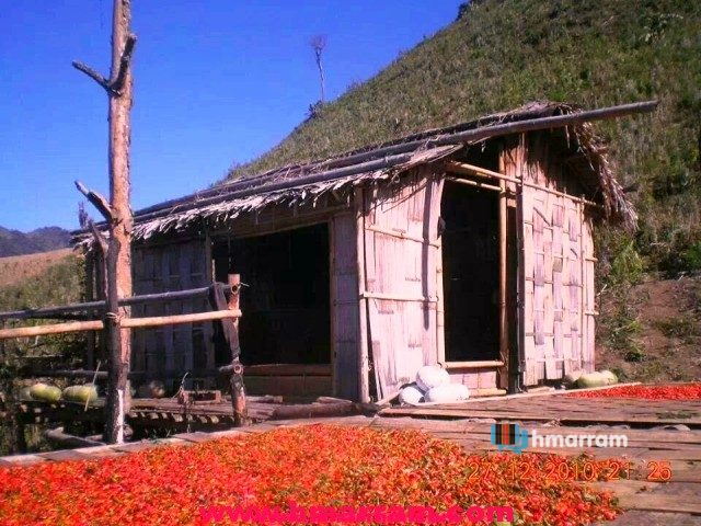 Ripe and red hot chillies are being spread out for drying in a jhum hut in Hmar Hills.