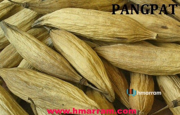 Pangpat-Hmar